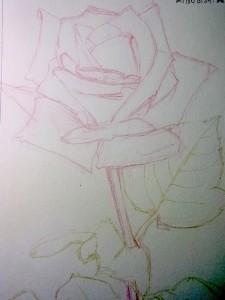 ステッドラー 消せる色鉛筆 ノリスクラブを使って絵を描く