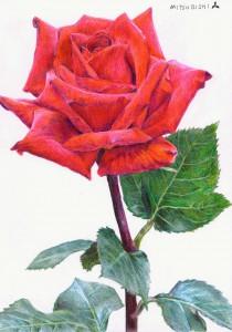 三菱 880 で描いたバラ